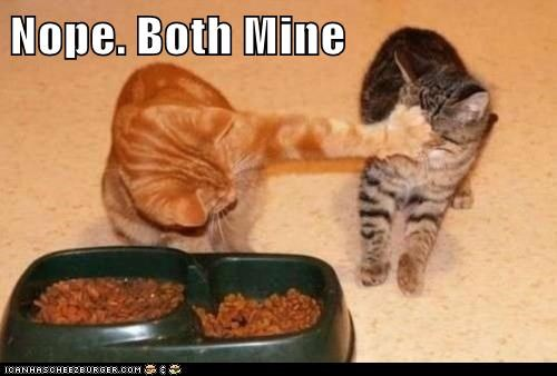 Cats food captions facepalm nope mine - 6585365248