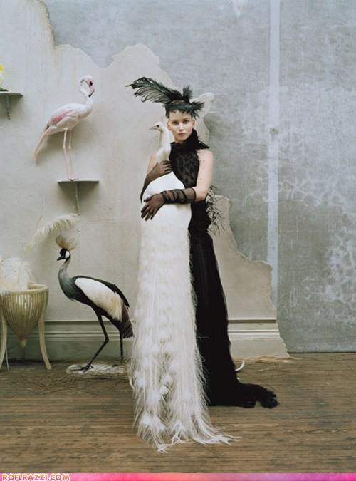 fashion feathers hat if style could kill jennifer lawrence peacock style - 6585378304