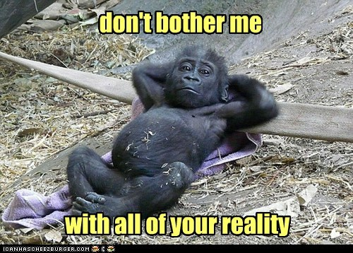 gorilla,reality,dont-bother-me,relaxed,fun