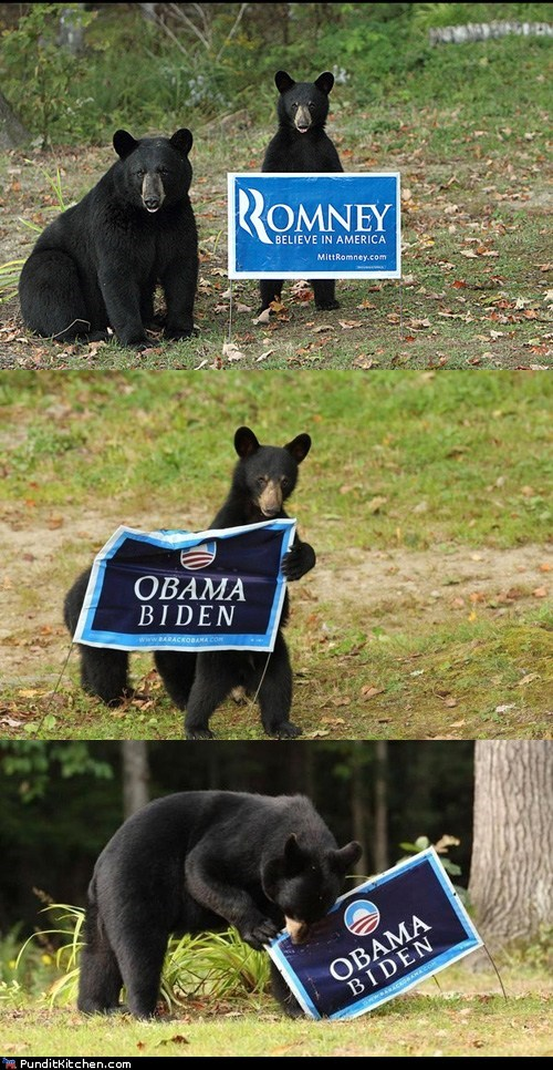 barack obama,bears,joe biden,Mitt Romney,signs,support,tearing,vote