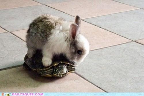 bunny happy bunday rabbit turtle - 6585800448