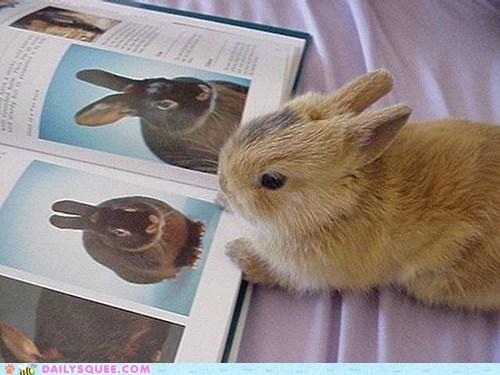 book bunny happy bunday pictures rabbit - 6585807104