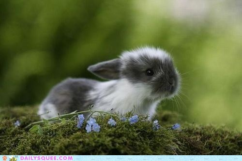 baby,bluebells,bunny,flowers,happy bunday,moss,rabbit