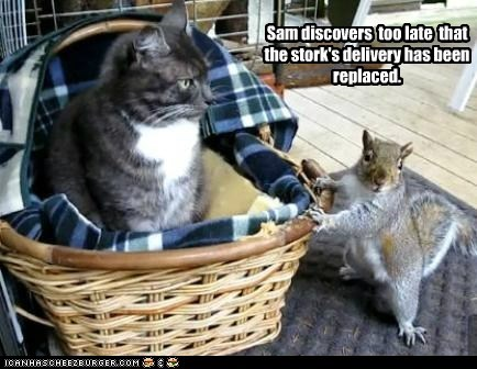 squirrel,cat,discovers,too late,replaced,stork,delivery,basket,lolz