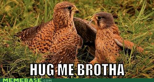 eagles,hug,brother,bros,wings,come over