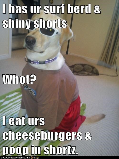 Cheezburger Image 6586163200