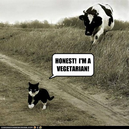 cat cow chasing honest! cheezburger vegetarian dont-believe-it angry honest
