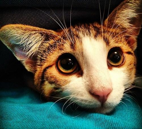 its-caturday - 6586182912