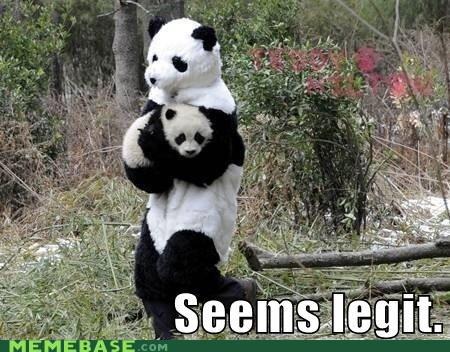 Babies its-real panda seems legit - 6586490368