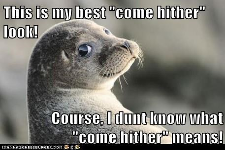 seal,come hither,look,dont-know,eyes