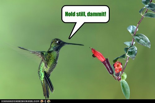 hummingbird hold still Flower food fast moving - 6586936064