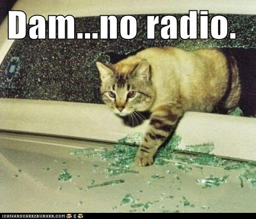 break in captions car Cats radio smash steal window