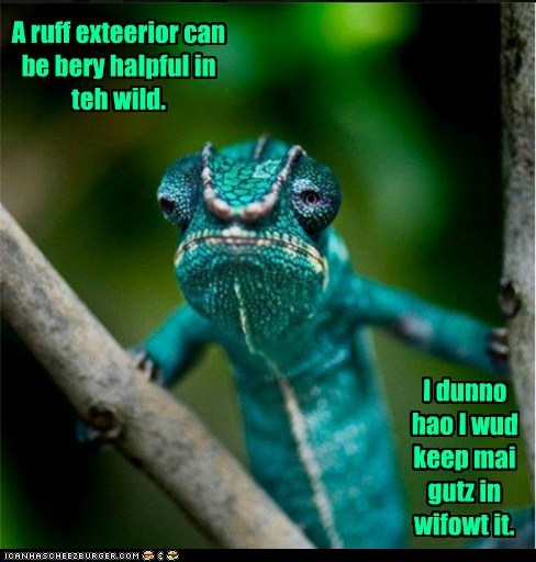 i-dont-know chameleon lizard exterior helpful guts