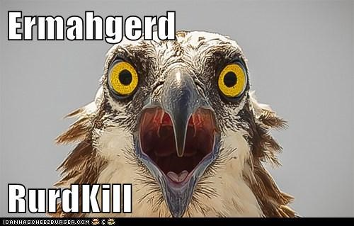 eagle Ermahgerd derp roadkill eating hungry food categoryvoting-page