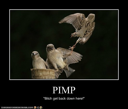 "PIMP ""Bitch get back down here!"""