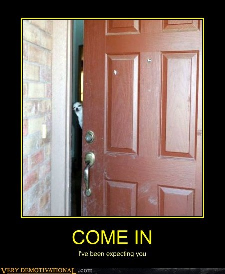 come in,dogs,door