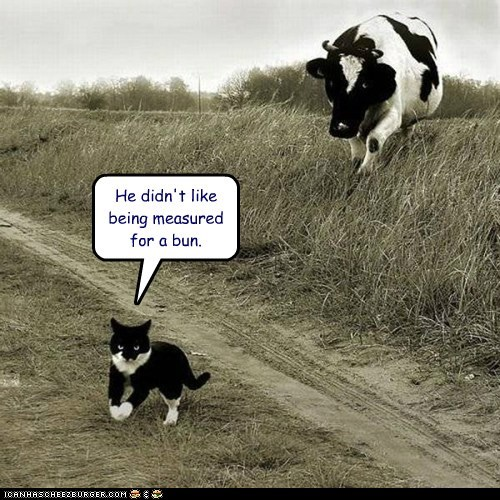 cow cat rude cheeseburger chasing angry - 6587880192