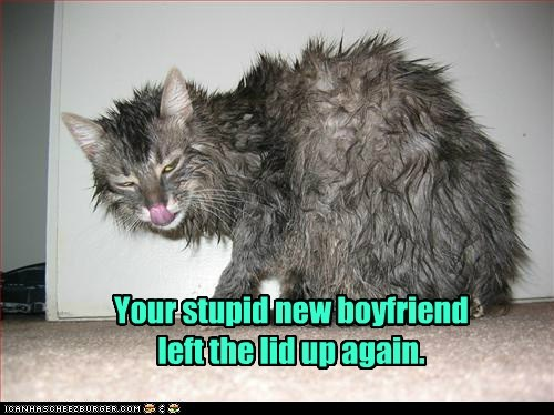 boyfriend,captions,Cats,hate,lid,toilet,water,wet