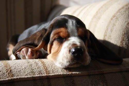 its-sundog lazy - 6588344832
