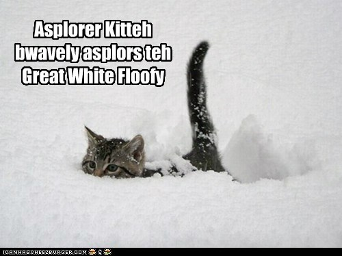 brave explorer kitteh,captions,Cats,floofy,great white,snow,winter