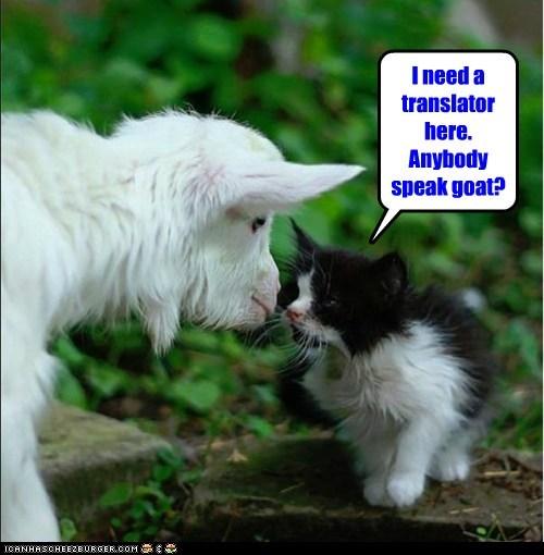 cat goat translator kitten kid naw sound languages - 6588535808