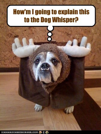 How'm I going to explain this to the Dog Whisper?