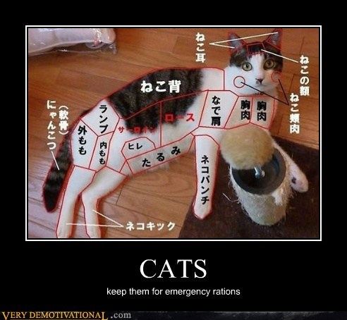 Cats,emergency,food