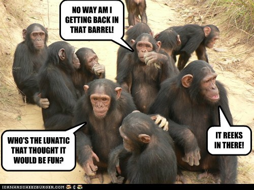 chimpanzees barrel of monkeys no way lunatic fun reeks ew free - 6588805632