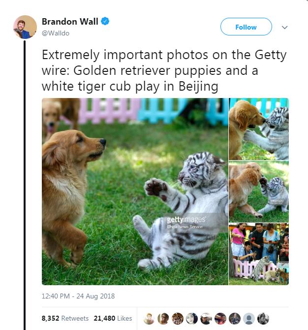 aww animal photos puppy golden retreiver friends cute cute photos - 6588933