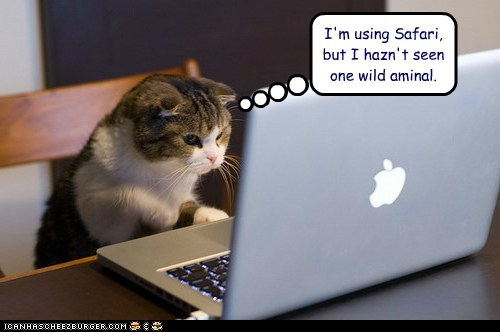 browser internet captions misunderstanding animal Cats safari - 6589272064