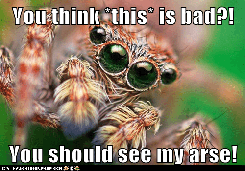 spider,bad,scary,eyes,ugly,arse
