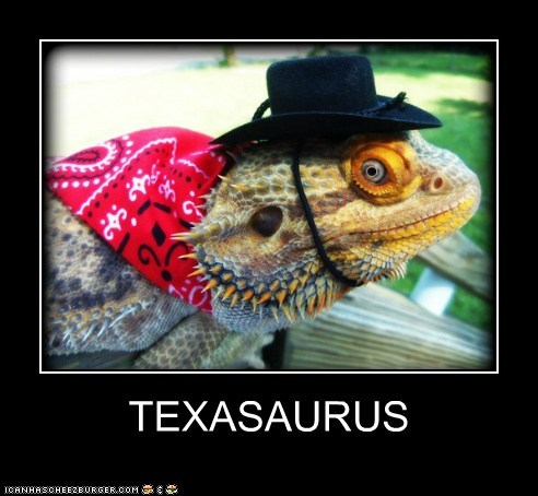 iguana texas dinosaur cowboy lizard categoryvoting-page - 6589449472