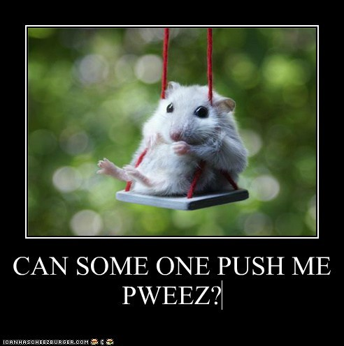hamster swing push waiting cute lolz - 6589663744