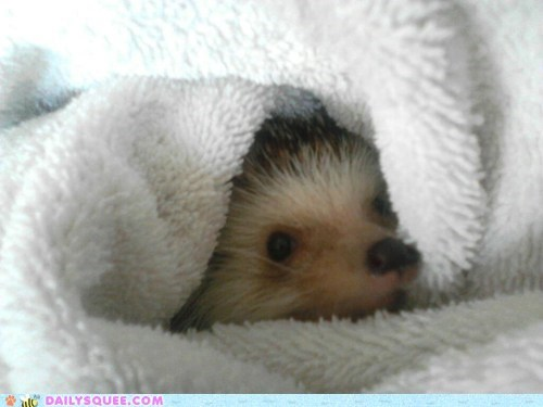 Snug as a.... hedgehog?