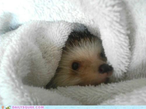 bath hedgehog pet reader squee snug squee towel - 6589703936