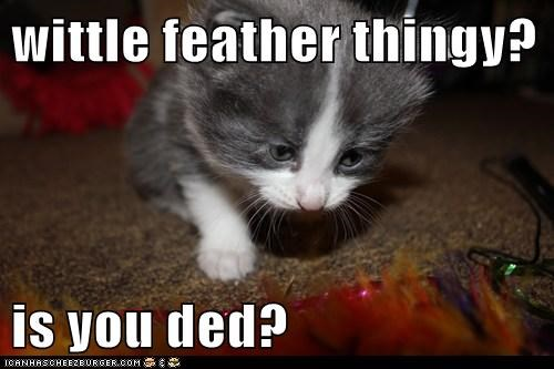 captions,Cats,dead,feather,thing