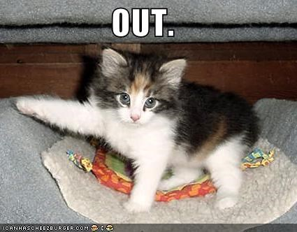 kitten lolcats lolkittehs paws pointing - 658990848