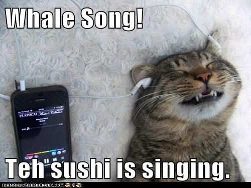 Music,ipod,sushi,song,captions,whale,sing,Cats