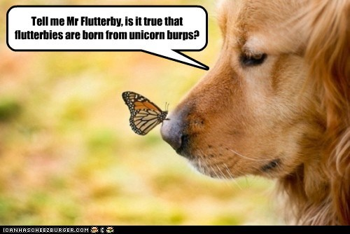 dogs,golden retriever,butterfly,unicorn,burps,nose