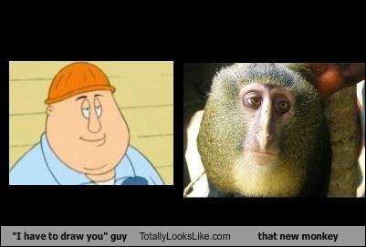 animation family guy funny new monkey TLL TV - 6590136064