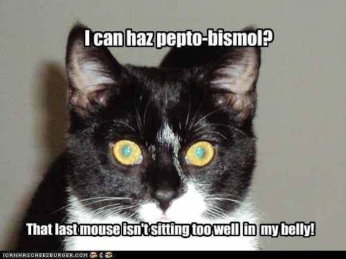 I can haz pepto-bismol? That last mouse isn't sitting too well in my belly!