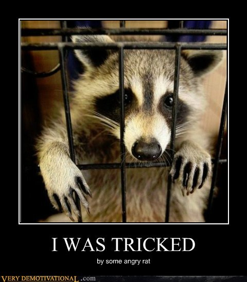 lab rat,raccoon,tricked