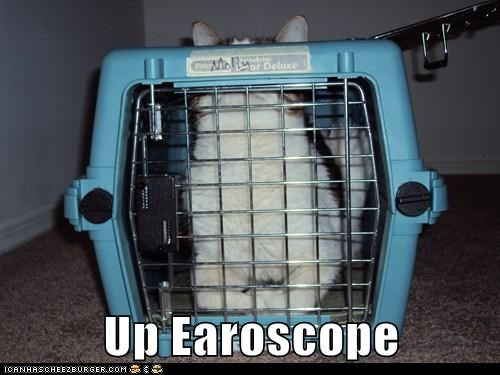 ear crate captions periscope Cats