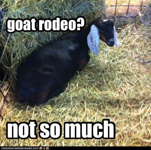 goat rodeo?
