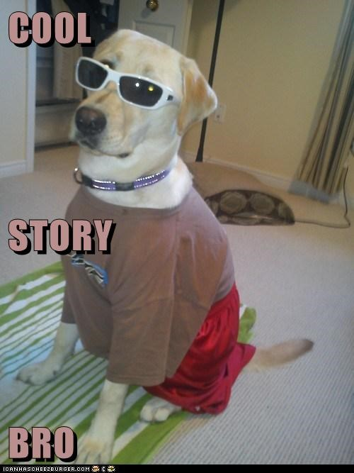 dogs,labrador,cool story bro,sunglasses,clothes