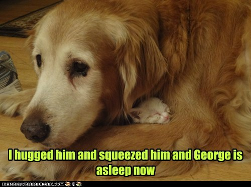 asleep,captions,Cats,dogs,George,hug,squeeze,tired