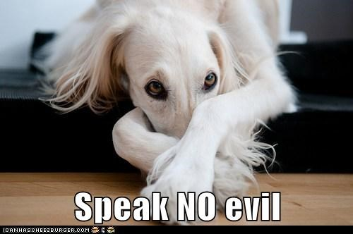 dogs what breed speak no evil ashamed
