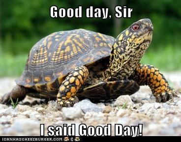 good day sir turtle gentleman offended - 6590731008