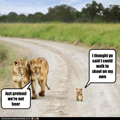 lions,parenting,school,walking,pretend,by myself,overprotective