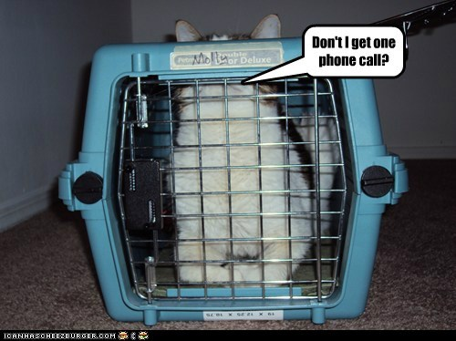 bars call captions Cats jail locked up phone call prison - 6590811136